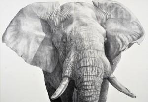 Herbert_Siemandel-Feldmann_Kohle_auf_Leinwand_Elefant