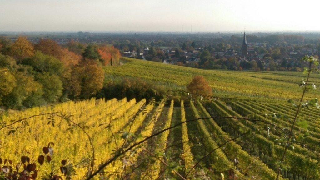 Neue Serie: KELLERKUNST – Chateau-de-la-Placeliere
