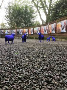 Im Hof des KuMuMü - Kunstmuseum Mülheim an der Ruhrstraße 3 sind derzeit 5 blaue Schafe